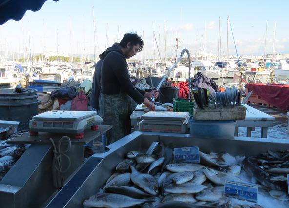 בפתח נמל היאכטות דייגים מנקים את שלל הבוקר