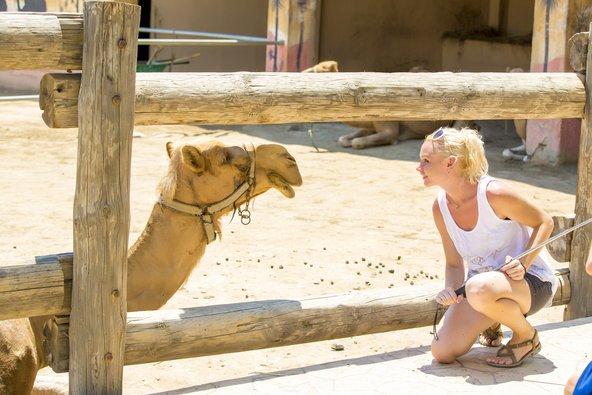 חוות הגמלים ליד לרנקה, אחת מהאטרקציות המשפחתיות הפופולריות באזור