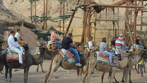בדרך לטיול גמלים (או ליתר דיוק טיול נאקות)