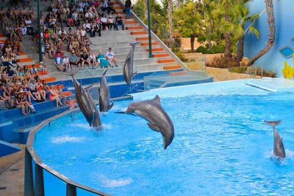 מופע דולפינים בפארק Zoo Marine | צילום: ARIMAG / Shutterstock.com