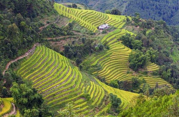 טרסות אורז בהא ג'יאנג בצפון-מזרח וייטנאם