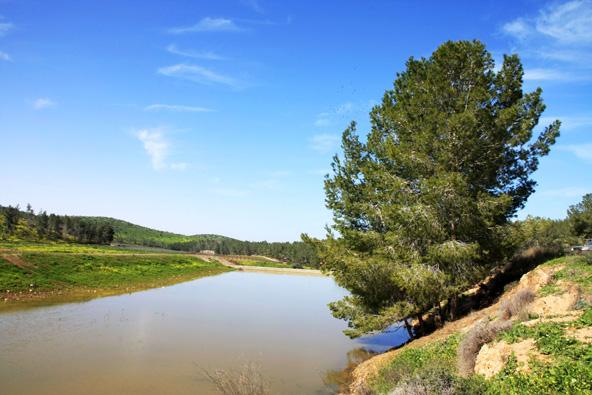 מאגר מים עונתי ביער אמציה