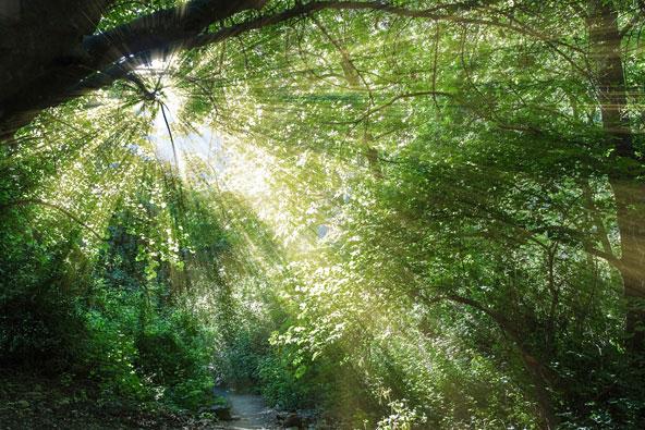 היערות היפים בישראל שאולי החמצתם