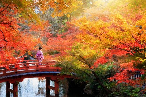 שלכת בפארק בקיוטו. הגנים היפניים הם מקום מושלם לתפוס בו שלווה