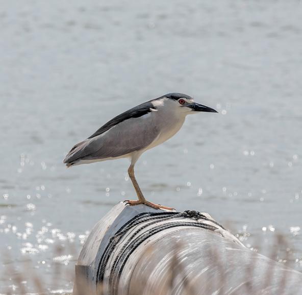 בסביבת בריכות הדגים של מעגן מיכאל אפשר לראות המוני סוגים של ציפורים