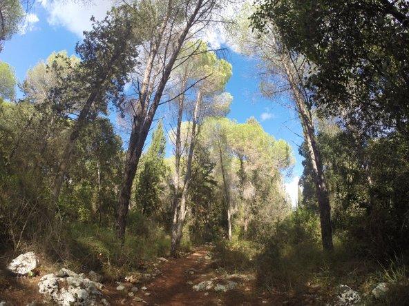 שביל הליכה בחורש הטבעי מוביל לשרידים של חורבת דנעילה