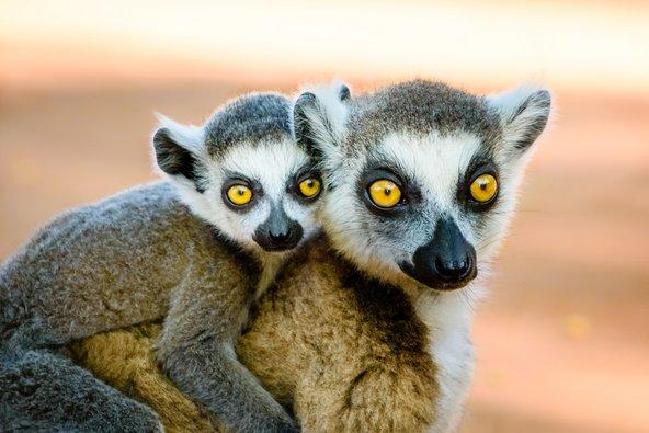 למורים בשמורת ברנטי במדגסקר