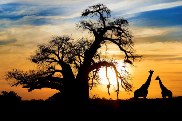 מזרח אפריקה: תמונת מצב