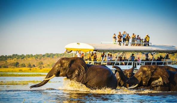תיירים משקיפים על פילים השוחים בנהר הצ'ובה