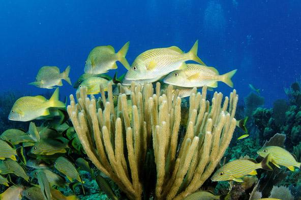 על פני ימים רבים: מסתורי העולם התת ימי