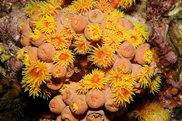 אלמוג אבן גלילן, ים אנדמן, תאילנד