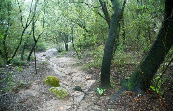 טיול בנחל באר שביער חניתה