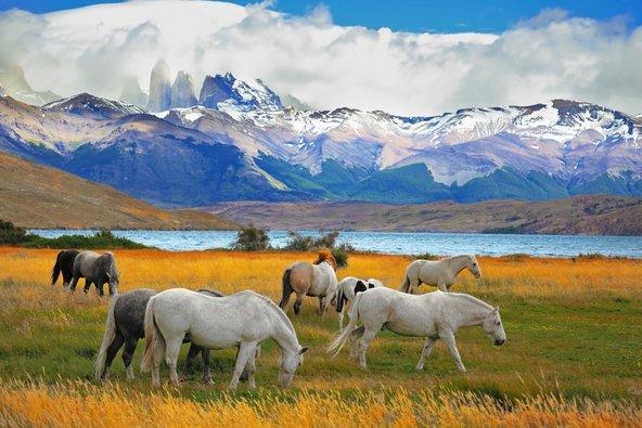 סוסים בפטגוניה. הרכיבה היא חלק בלתי נפרד מחוויית הטיול
