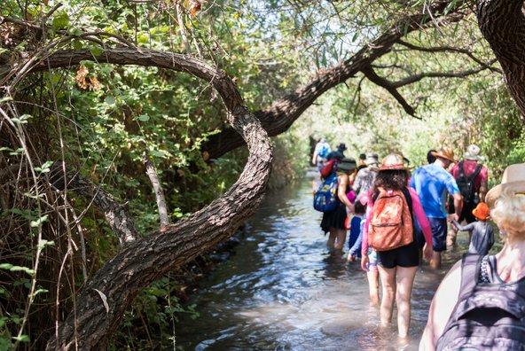 טיול בסבך של צמחייה ומים בשמורת המג'רסה