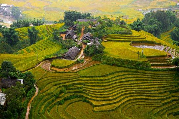 טרסות אורז ליד סאפה בווייטנאם