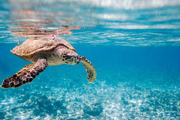 המים הצלולים של סיישל מהווים בית למגוון גדול של יצורים ימיים