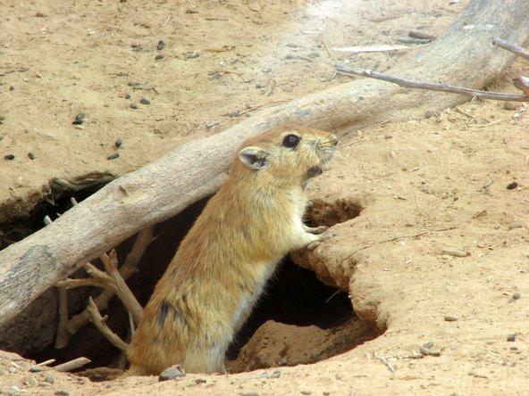 בחי רמון אפשר להתרשם מחיות מדבריות קטנות | צילום: דני סטרנפלד, פליקר