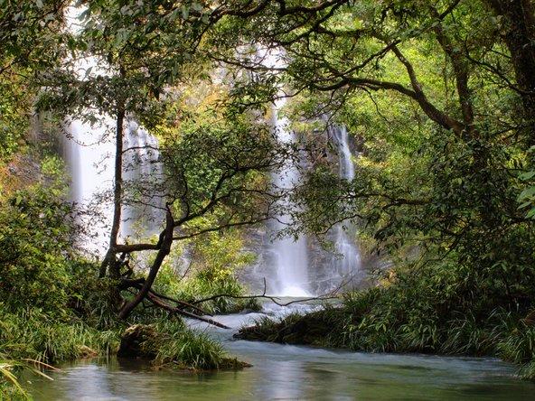 מפלים ביער הגשם דיינטרי