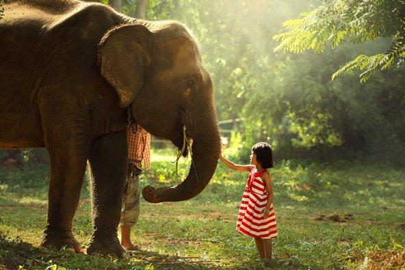 בצפון תאילנד יש חוות פילים שמאפשרות לטפל בהם במשך יום שלם