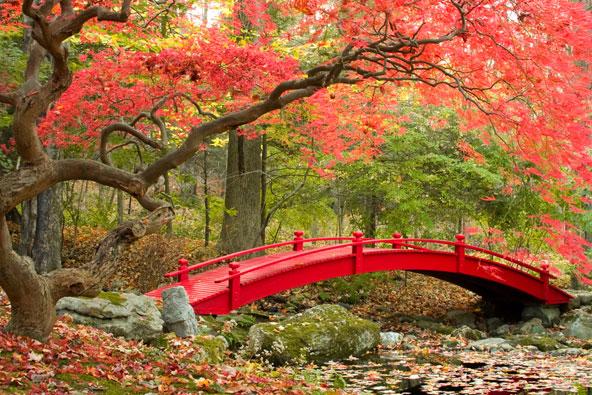 יפן – ארבע עונות