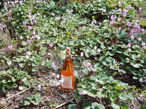 ורוד על ורוד: פריחת רקפות במטה יהודה ויין של כרם ברק | צילום: עומר הרפז