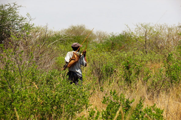הציד אצל בני הסאן הוא צורך קיומי, דרך להבטיח שהמשפחה לא תרעב