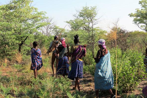 לחיות עם לקטים ציידים בנמיביה
