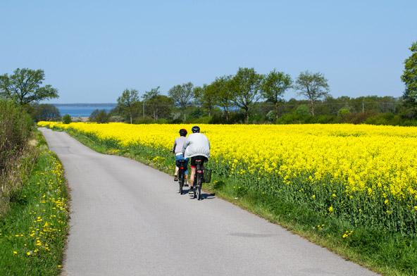 אין כמו טיול אופניים בשוודיה בקיץ, כשמזג האוויר נעים והפריחה מעטרת את צדי הדרכים