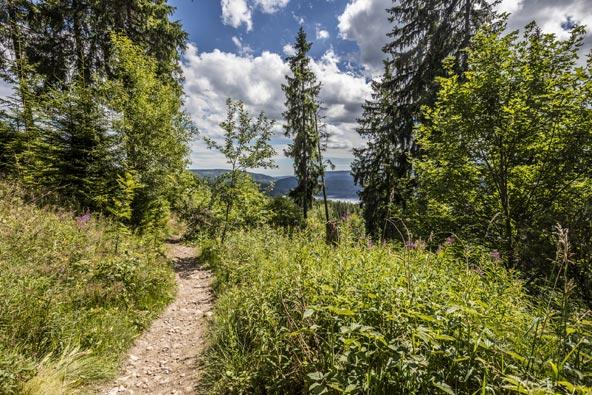 שביל הליכה באזור אגם שלוך | צילומים: Hochschwarzwald Turismus GmbH