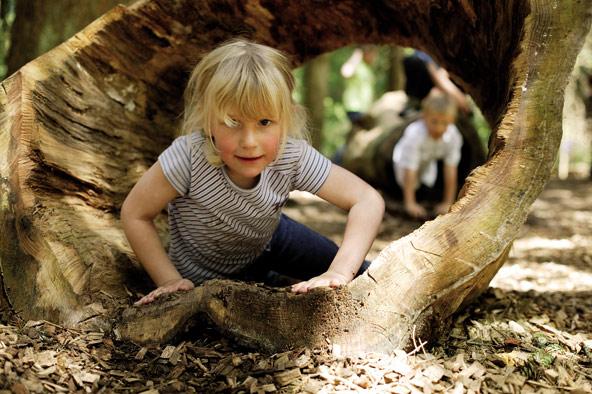 ביער השחור הגבוה הילדים יכולים ליהנות משעשועים בחיק הטבע
