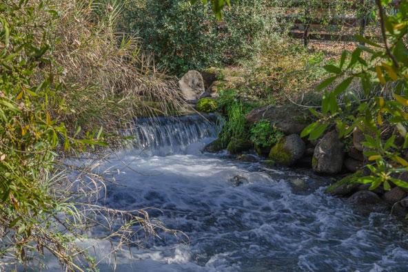 נחל דן, המוקף בצמחייה, זורם בשמורת תל דן