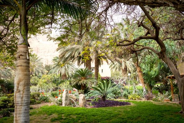 הגן הבוטני בעין גדי. הגן היחידי מסוגו שבו גרים אנשים