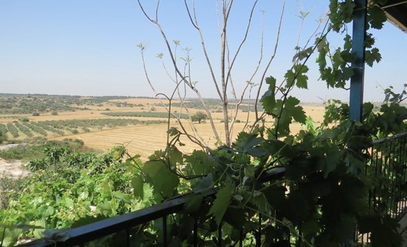הנוף מהמרפסת של סיגל ואיליה בלוזית
