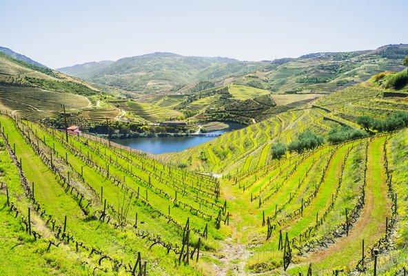 כרמים בעמק הדורו, אזור היין המוביל בפורטוגל הסמוך לפורטו | צילום: שאטרסטוק