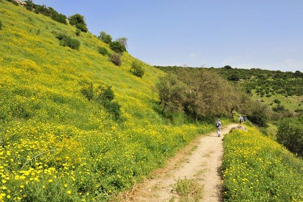 האביב הוא אחת העונות הטובות ביותר לטיול בשביל
