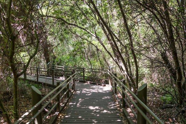 שביל עץ בשמורת תל דן