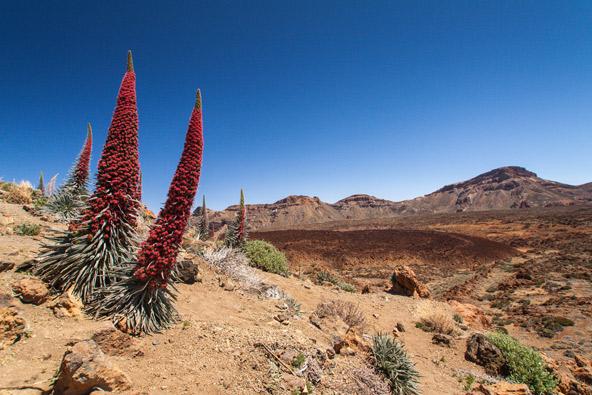 הצמחייה הייחודית, הכוללת עשרות מינים של צמחים אנדמיים, תורמת למראה המיוחד של השמורה