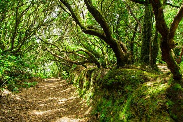 שביל הליכה ביער אנגה