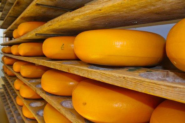 מדפים עמוסי גבינה בגאודה