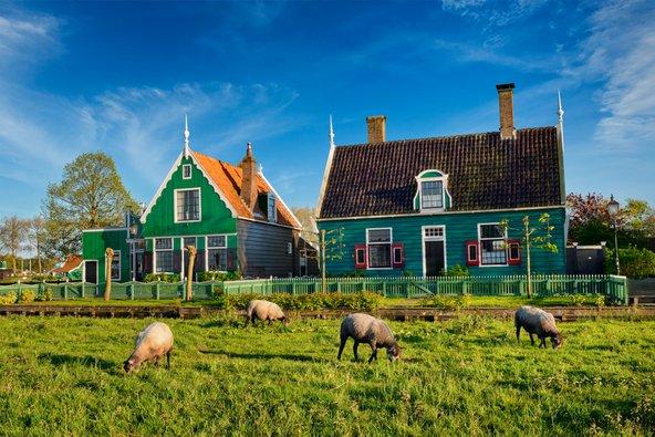 בתי החווה של הולנד הם אפשרות נהדרת ללינה משפחתית