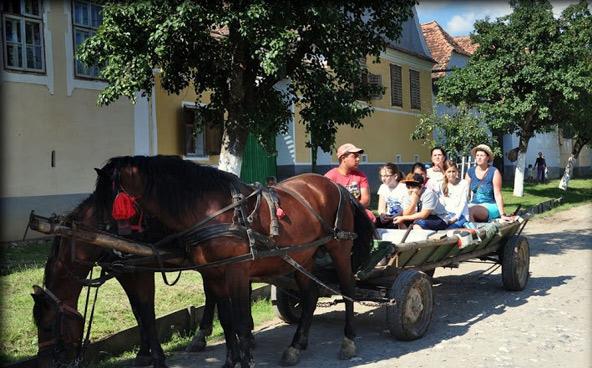 בחזרה לעבר: טיול בכרכרה רתומה לסוסים | הצילום באדיבות אקו אדוונצ'ר