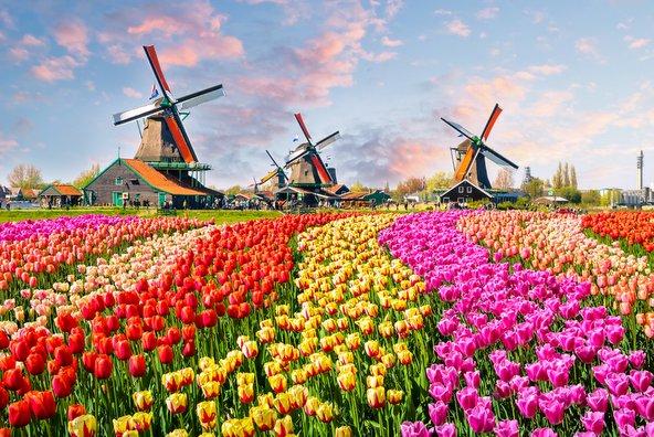 טיפים להולנד: ההמלצות הכי שוות