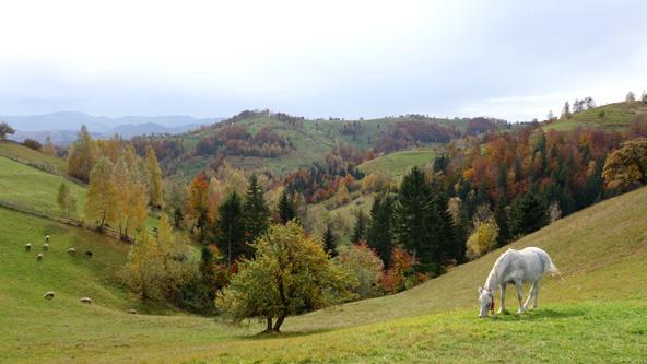 נופי הקרפטים ברומניה. הזמן עמד מלכת   צילום: טל רוזוב