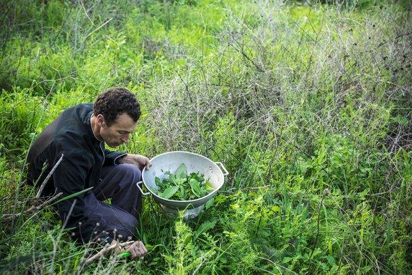 ליקוט עשבי תבלין בגינה האורגנית של מסעדת רוטנברג