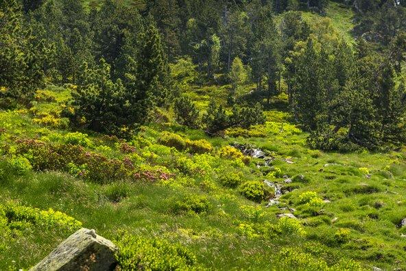 טיול רגלי באחד משבילי החופש משלב הליכה בנופי הפירנאים עם חיבור מרגש לעבר היהודי   צילום: Òscar Rodbag_Arxiu del Parc Natural de l'Alt Pirineu
