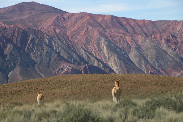 סלטה וחוחוי, צפון ארגנטינה – המדריך לתרמילאי