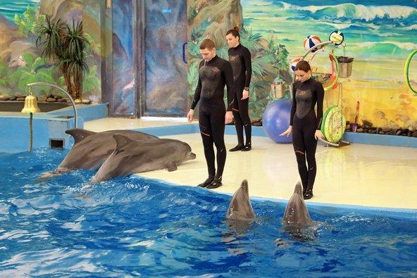 מופעי דולפינים בפארק ריביירה | צילום: ID1974 / Shutterstock.com