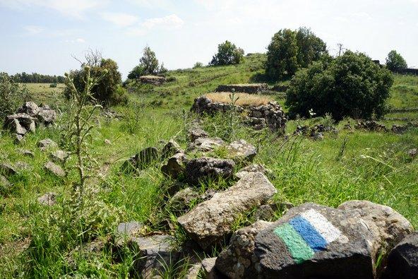 שביל הכולן עובר בין שדות ושטחי מרעה | צילום: שאטרסטוק
