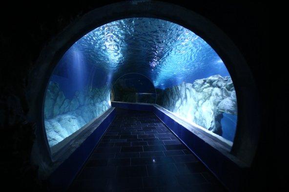 המנהרה השקופה באקווריום | צילום: שלומי כהן