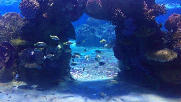דגים בשלל צבעים בגלריית הים האדום | צילום: יניב שאואר